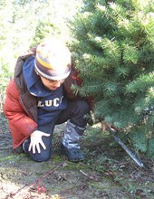 Find Christmas Trees in Hillsboro, Oregon | PNW Christmas Tree ...