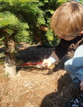 dallas oregon offers several ways for your family to find the perfect christmas tree and have a wonderful holiday experience christmas tree lots allow you